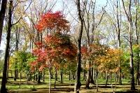 masyuen_autumn_6_0413