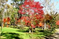 masyuen_autumn_6_0414