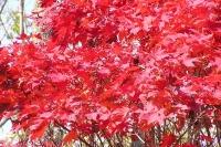 masyuen_autumn_6_0418