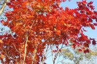 masyuen_autumn_6_0419