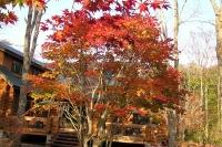 masyuen_autumn_6_0420