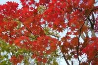 masyuen_autumn_6_0421