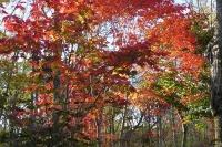 masyuen_autumn_6_0422
