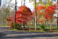 masyuen_autumn_6_0423