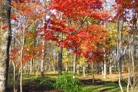 masyuen_autumn_6_0424