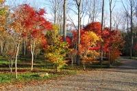 masyuen_autumn_6_0425