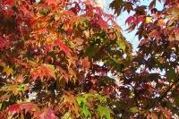 masyuen_autumn_6_0426