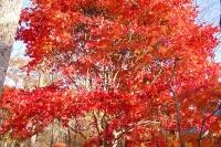 masyuen_autumn_6_0427
