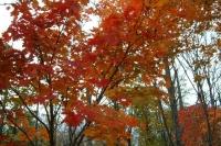 masyuen_autumn_6_0428