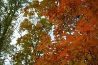 masyuen_autumn_6_0429