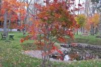 masyuen_autumn_6_0431
