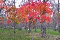 masyuen_autumn_6_0432