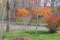 masyuen_autumn_6_0439