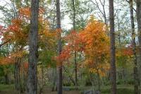 masyuen_autumn_6_0444