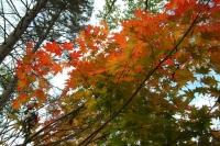 masyuen_autumn_6_0445