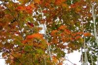 masyuen_autumn_6_0449