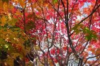 masyuen_autumn_6_0450