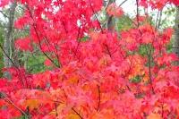 masyuen_autumn_6_0451
