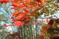 masyuen_autumn_6_0452