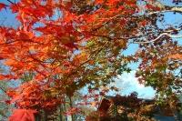 masyuen_autumn_6_0453
