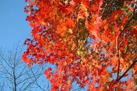 masyuen_autumn_6_0454