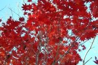 masyuen_autumn_6_0455