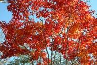 masyuen_autumn_6_0456