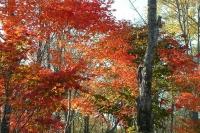 masyuen_autumn_6_0457