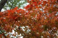 masyuen_autumn_6_0458