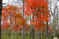 masyuen_autumn_6_0459