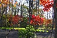 masyuen_autumn_6_0460