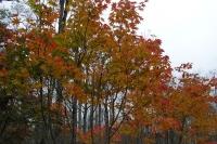 masyuen_autumn_6_0462