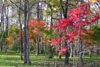 masyuen_autumn_6_0463