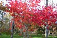 masyuen_autumn_6_0464