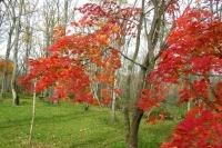 masyuen_autumn_6_0466