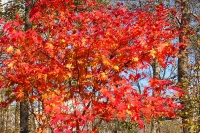 masyuen_autumn_6_0469