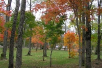 masyuen_autumn_6_0484