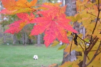 masyuen_autumn_6_0491