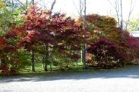 masyuen_autumn_8_0003