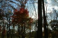 masyuen_autumn_8_0021