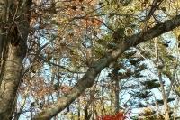 masyuen_autumn_8_0026