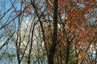 masyuen_autumn_8_0027
