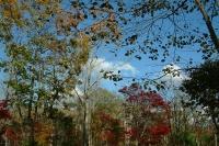 masyuen_autumn_8_0029