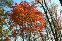 masyuen_autumn_8_0031