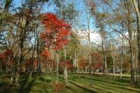 masyuen_autumn_8_0032