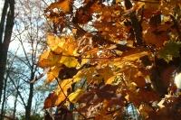 masyuen_autumn_8_0034