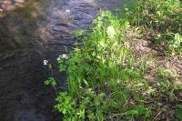 masyuen_river_0015