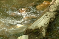 masyuen_river_0026