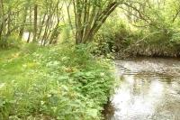 masyuen_river_0029