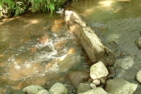 masyuen_river_0051